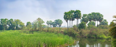 Landschapsscène van het bed van het moerasland, van het moeras, van de stroom of van de rivier met groen Stock Foto