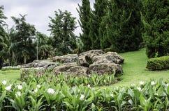 Landschapsstenen en bloemen Royalty-vrije Stock Fotografie