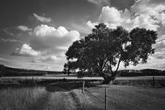 Landschapswilg Royalty-vrije Stock Fotografie