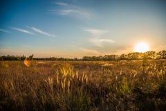 Landschapszonsondergang over gebied Royalty-vrije Stock Afbeelding