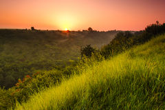 Landschapszonsopgang bij de zomer Mistige ochtend op weide Stock Afbeelding