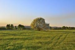 Landsckape de ressort avec le pommier de floraison Photo libre de droits