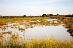 Landscpae de Camargue Images libres de droits