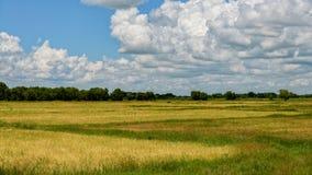 Landscpae de myanmar d'ofbago de gisement de riz Image stock