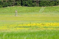 Landscpae met de jachthuid Stock Foto's