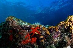 Landscpe subacuático Fotos de archivo libres de regalías