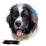 Landseer-Haustierporträt der digitalen Kunstillustration des Haustiertieres Canis stammte aus Kanada Neufundland Säugetierwelpe stock abbildung