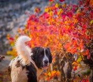 Landseer-Hundewelpe lizenzfreie stockfotos