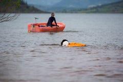 Landseer trakenu kobiety psi czysty szczeniak Obraz Royalty Free