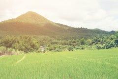 Landsfältet som omges av berg Royaltyfria Bilder
