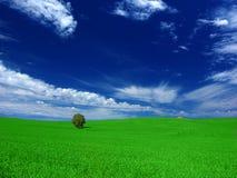 landsfältgreen royaltyfria bilder