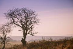 Landsfältlandskap på höstdag Royaltyfri Bild