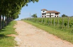 Landsgränd bredvid en vingård Arkivfoton