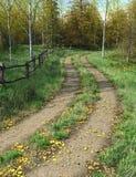 Landsgränden passerar genom hela skog i hösttid Royaltyfri Foto