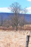 Landskap 0001 Arkivfoto