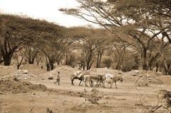 Landskap Afrika Fotografering för Bildbyråer