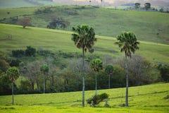 Landskap Australien för gröna kullar Royaltyfria Bilder