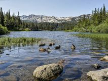 Landskap av änder som simmar i en sjö på kolossalt sjöområde med en sikt till mountiainsna royaltyfria bilder