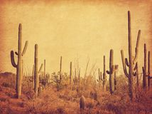 Landskap av öknen med Saguarokakturs Foto i retro stil Ökad pappers- textur tonad bild royaltyfri foto