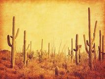 Landskap av öknen med Saguarokakturs Foto i retro stil Ökad pappers- textur tonad bild arkivbild