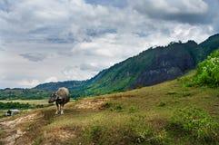 Landskap av ön Samosir, Sumatra, Indonesien Fotografering för Bildbyråer
