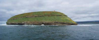 Landskap av ön var lunnefåglarna bor i den Skjalfandi fjärden i nordliga Island arkivfoton