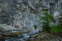 Landskap av Abchazien royaltyfri fotografi