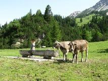 Landskap av alpsna i Liechtenstein Arkivbild
