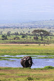 Landskap av Amboseli Kenya Kenya Fotografering för Bildbyråer