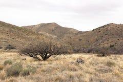 Landskap av Arizona USA Royaltyfria Bilder