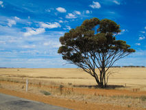 Landskap av Australien Arkivfoto