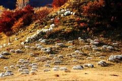Landskap av Bashang grässlättar Arkivfoton