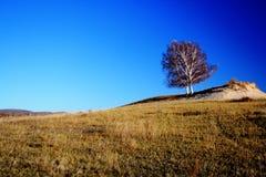 Landskap av Bashang grässlättar Royaltyfria Foton