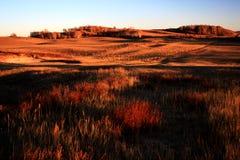 Landskap av Bashang grässlättar Fotografering för Bildbyråer