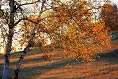 Landskap av Bashang grässlättar Royaltyfri Foto