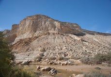 Landskap av bergen för Negev öken Arkivbilder