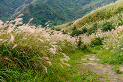 Landskap av berget i Taipei Royaltyfri Fotografi