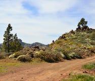 Landskap av berget i våren, Gran canaria ö Royaltyfri Fotografi
