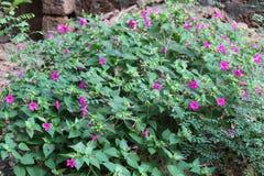 Landskap av blommor Arkivfoto