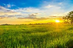 Landskap av cornfielden och det gröna fältet med solnedgång på lantgården, arkivfoto