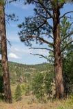 Landskap av Custer State Park royaltyfri foto
