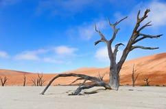 Döda Vlei, Namibia, Sydafrika Arkivfoton