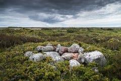 Landskap av den avlägsna ön i Finland Arkivbilder