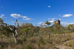 Landskap av den brasilianska cerradoen arkivfoton