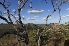 Landskap av den brasilianska cerradoen arkivbild