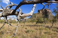 Landskap av den brasilianska cerradoen fotografering för bildbyråer