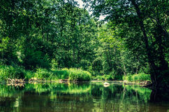 Landskap av den flödande floden arkivfoton