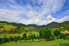 Landskap av den gröna kullen i sommar Royaltyfri Bild
