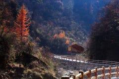 Landskap av den Guanegou medborgaren Forest Park i Kina ` s Gansu Royaltyfria Foton