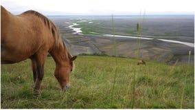 Landskap av den icelandic naturen Arkivbilder